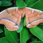 The Moth: A Method To Improve Students Speaking Skills