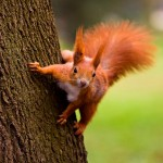 Whammy-Induced Frisky Squirrel Syndrome can affect anyone at any time, and it is important for administrators to remain constantly aware of their main goals otherwise it becomes very easy to veer significantly off-track.